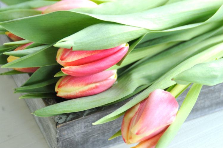 rood geel groen tulpen
