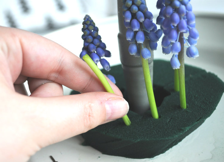 blauwe druifjes in oase 1