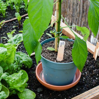 DIY | Plantenlabels: naambordjes zelf maken
