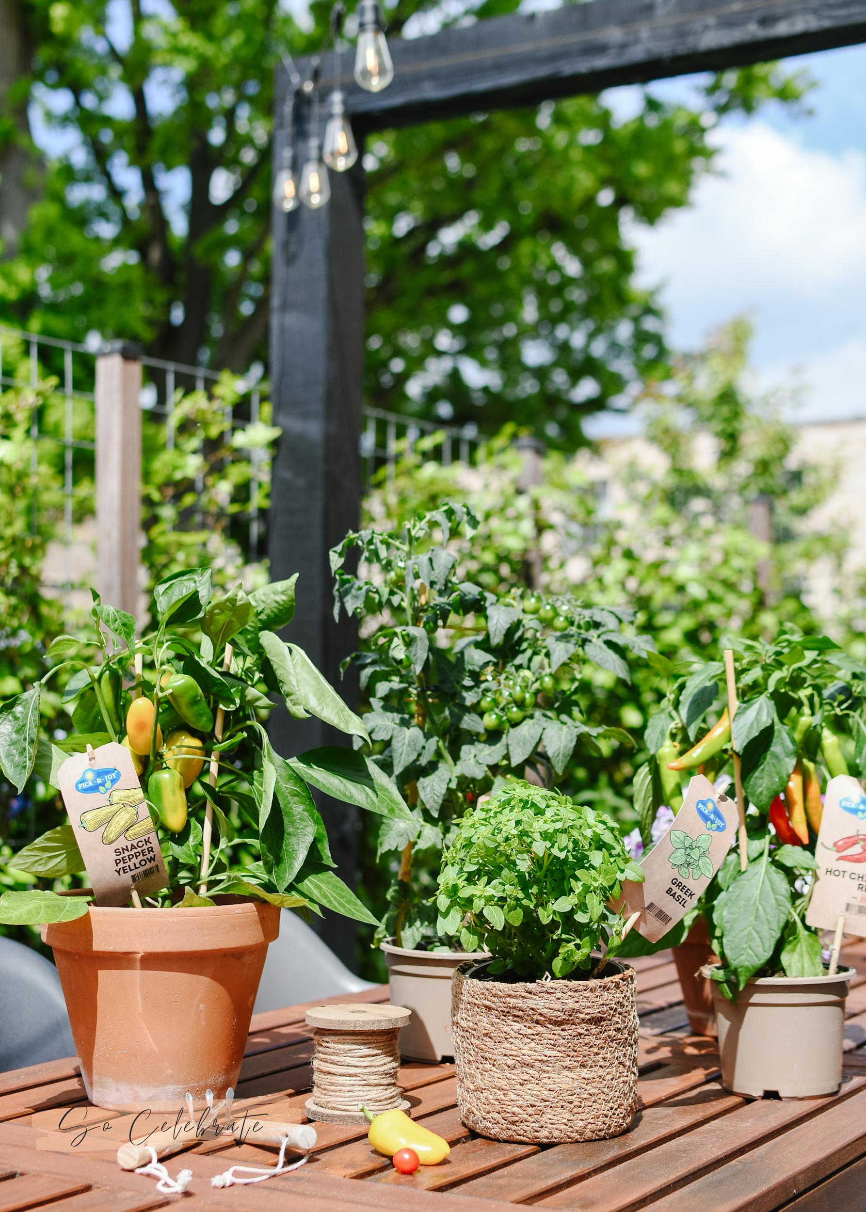 Pick & Joy planten voor moestuin in bakken en potten