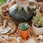 Neutrale zomerse decoratie: tips & ideeën