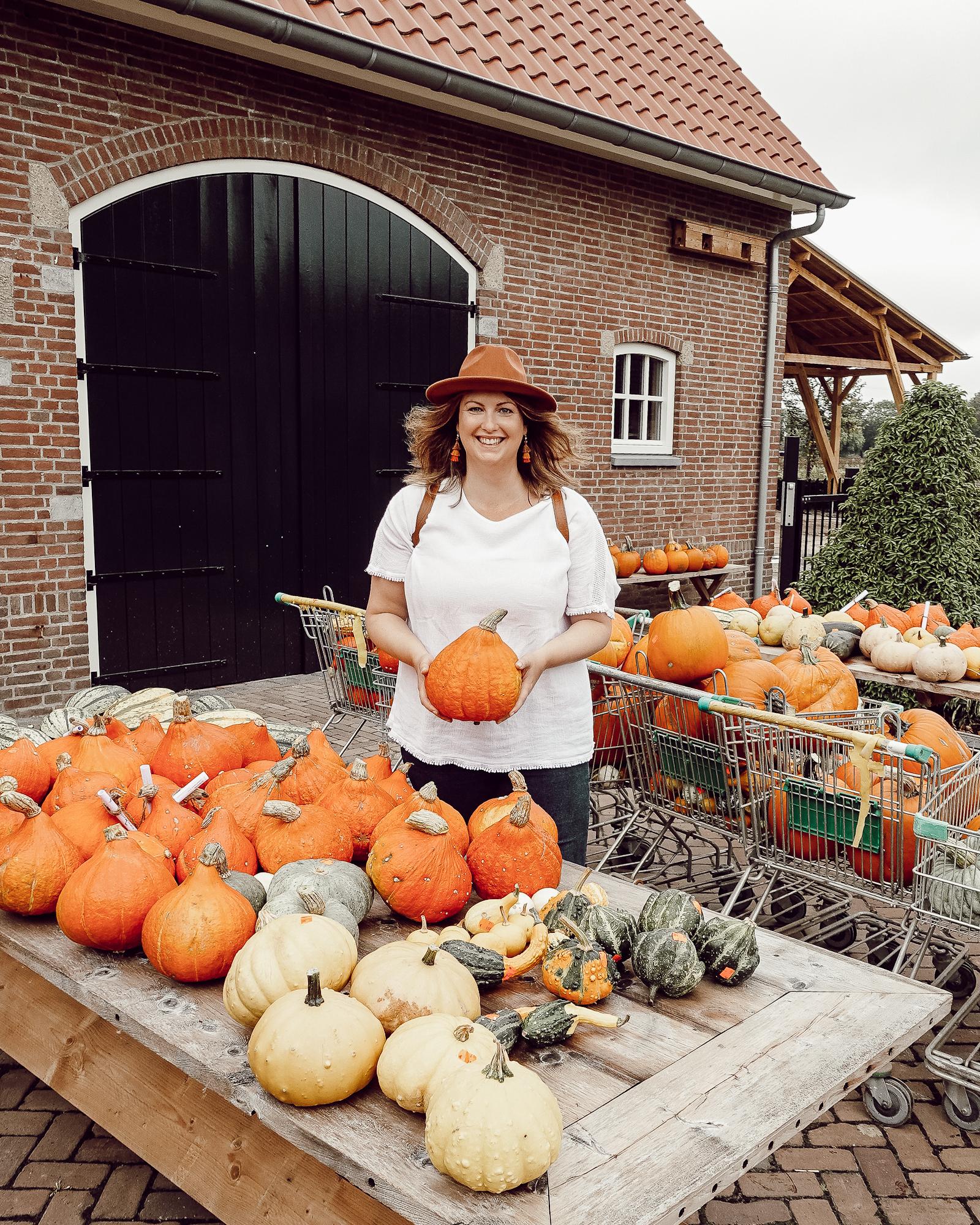 Pompoenen kopen in Brabant, pompoenerij, pompoenboerderij